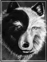 Indianen-Wijsheid-Witte-en-zwarte-wolf