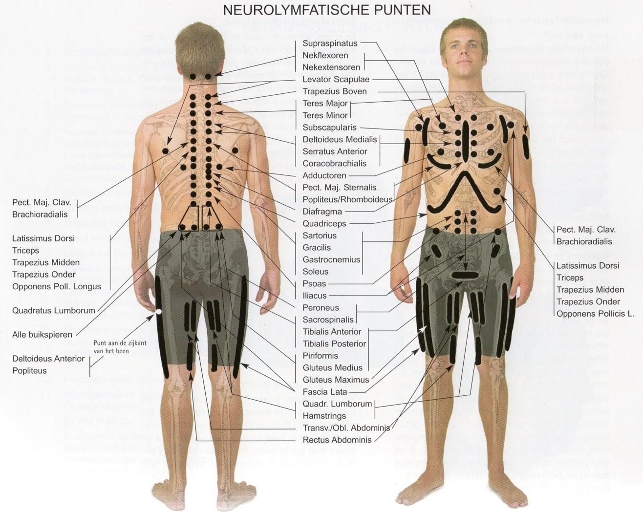 neurolymfatische punten
